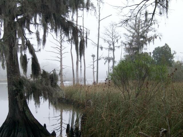 Take a holiday hike into this swamp — and return enchanted.